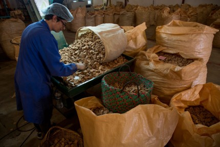 NovaCortiça cork factory
